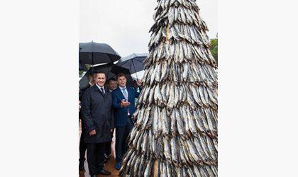 Самая большая в России рыбная елка появилась во Владивостоке